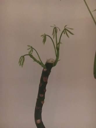 plant growth 2