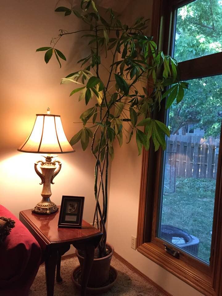 plant whole
